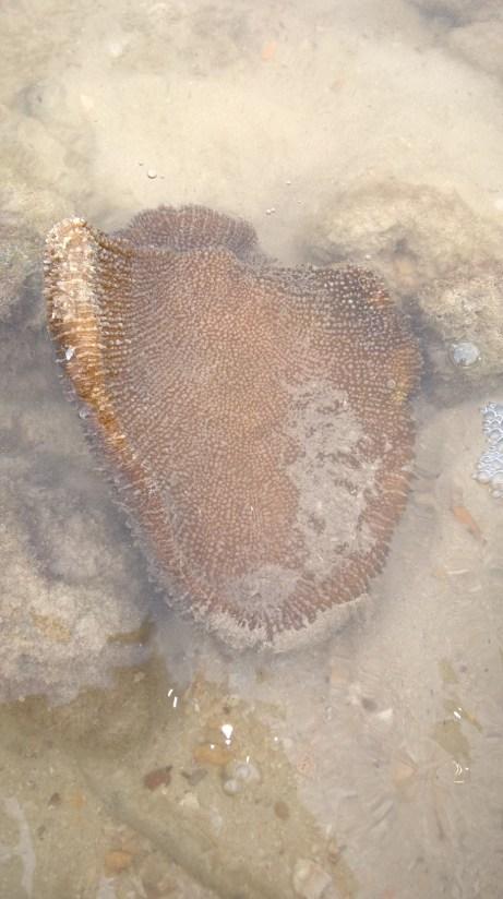 Sea creature phi phi island 5