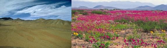 foto-deserto-fiorito
