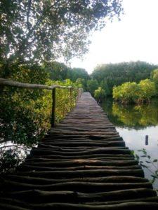 Wisata Mangrove angke
