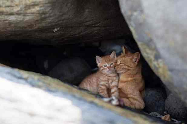 Kucing Pulau Dea-Dea