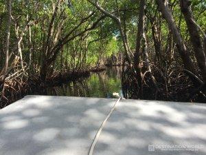 Fahrt mit dem Airboat durch die engen Mangrovenwälder