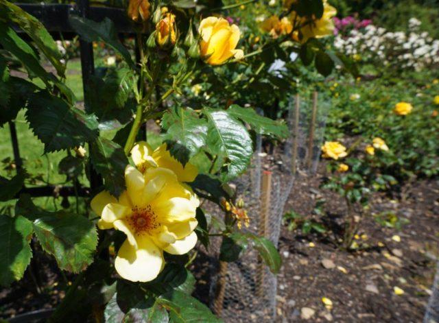 Flowers in Edinburgh Zoo
