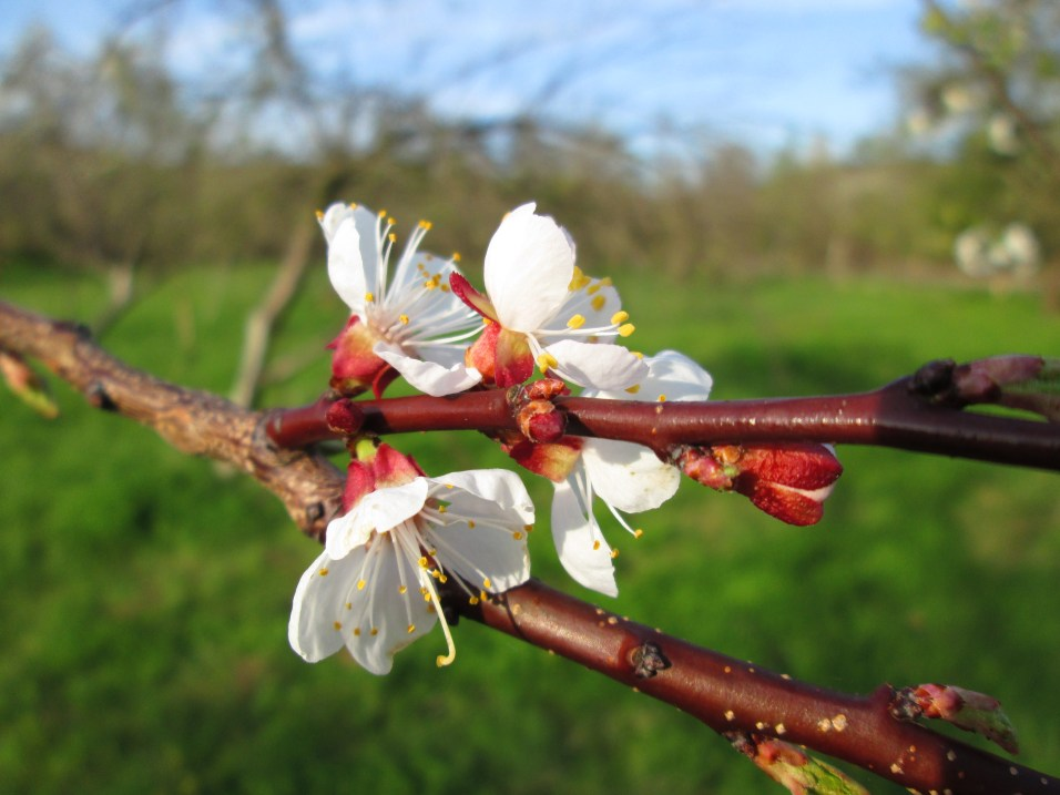 Пролет в Дряновския край