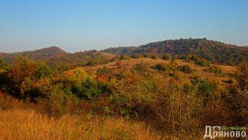 Борова гора Одрина - Дряново