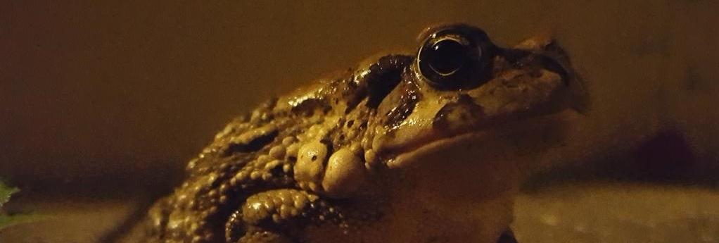Destination Garden Route - bull frog