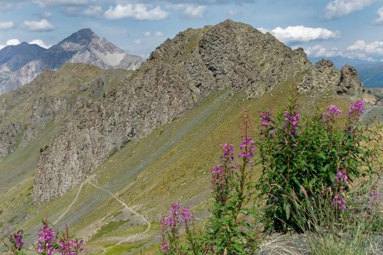 Le collet vert, mont Chenaillet