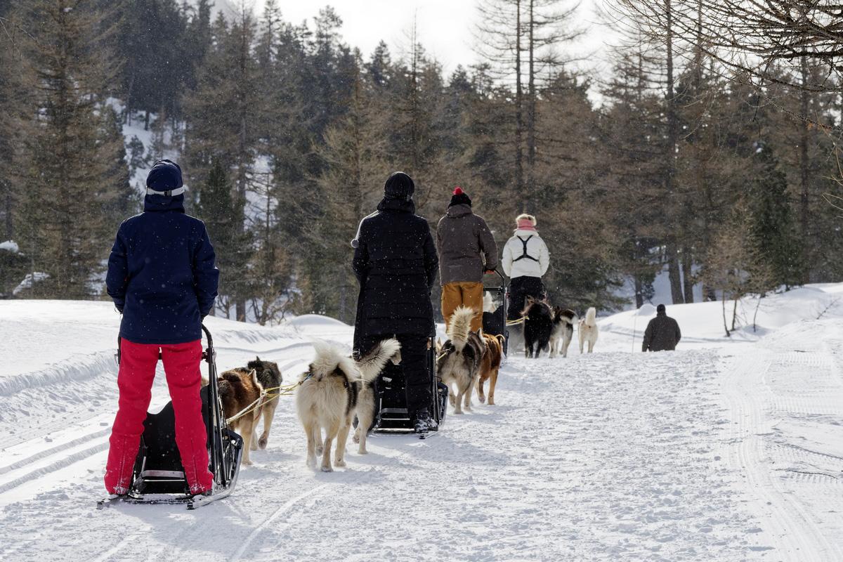 Conduite d'attelage chiens de traîneaux col de l'Echelle