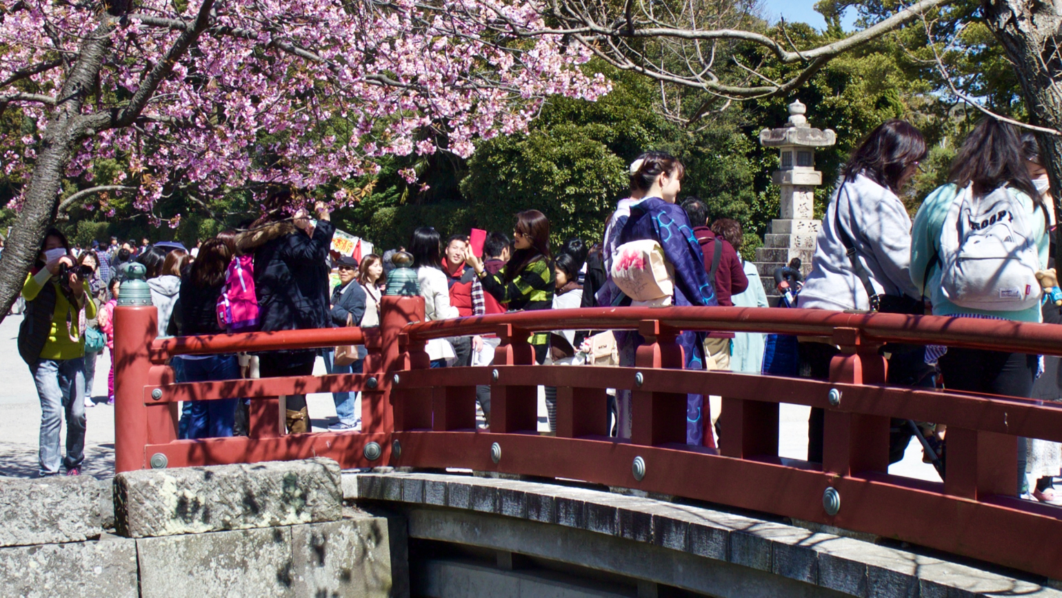 Local Japanese tourists are viewing cherry blossoms in Kamakura, Japan