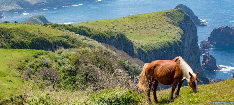 Cheval sur les falaises des îles Oki