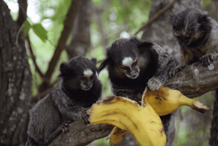 feeding monkeys in brazil