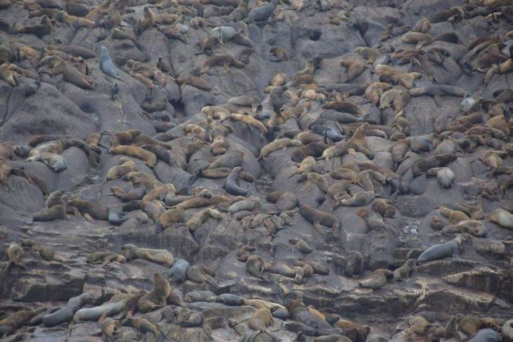 more sea lions, fun things to do in lima, peru