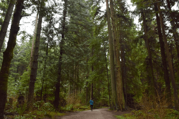 Exploring Stanley park in Vancouver