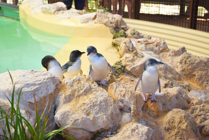 Penguin Island is one of the best day trips from Perth