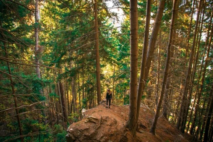 Tikki Trail to Ben lomond trail