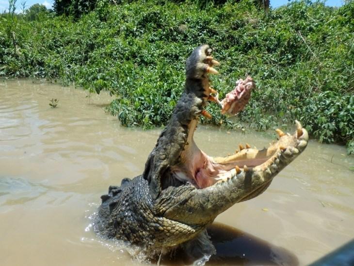 Jumping crocs darwin