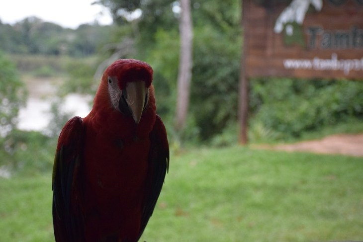 macaw at the eco-lodge