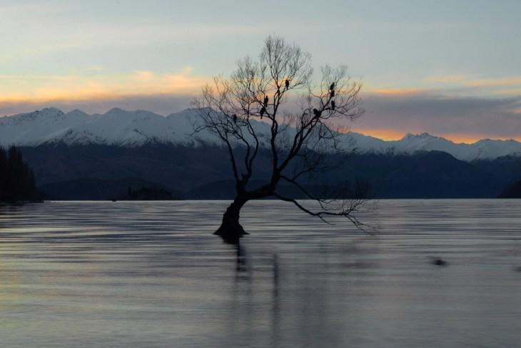 sunset photo of that wanaka tree