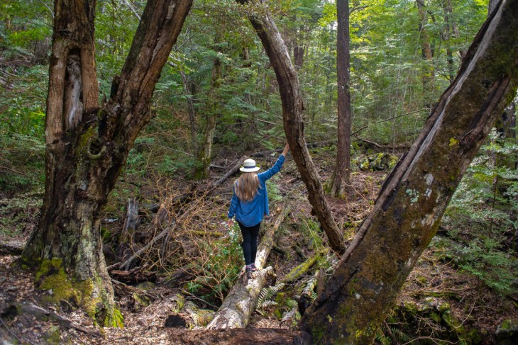 walking along the mt critchon loop track