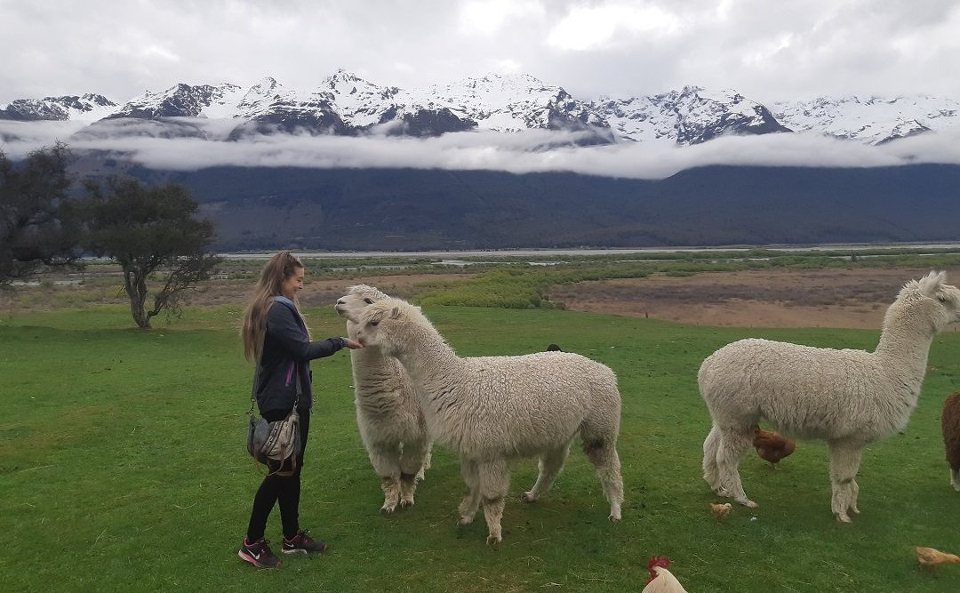 feeding animals on the glenorchy animal experience