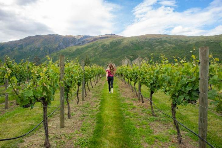 exploring the vineyards in the gibbston vally