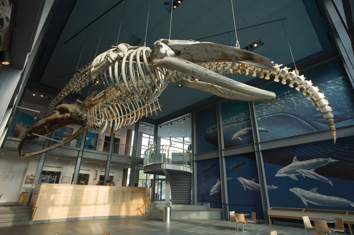 Museums Amp Attractions Destination New Bedford