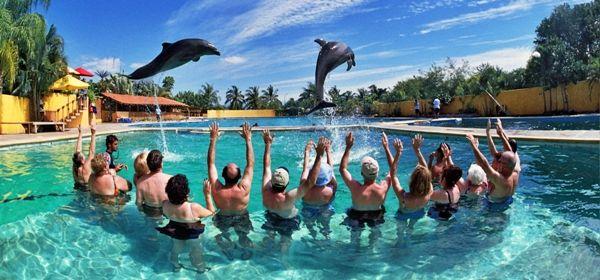 swim-with-dolphins-acapulco