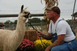 Moore or Less Farm offers farm tours for those interested in learning more about alpacas.