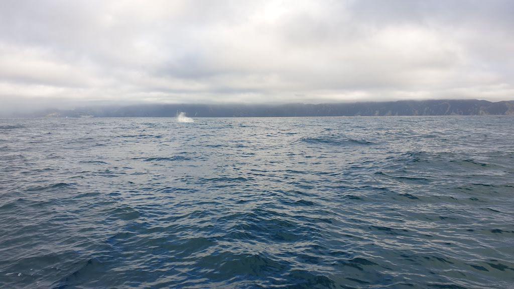 Baleine Whale Watching Kaikoura