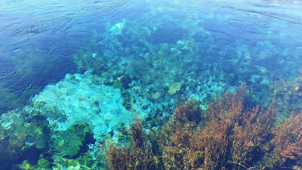 Te Waikoropupu springs Golden Bay
