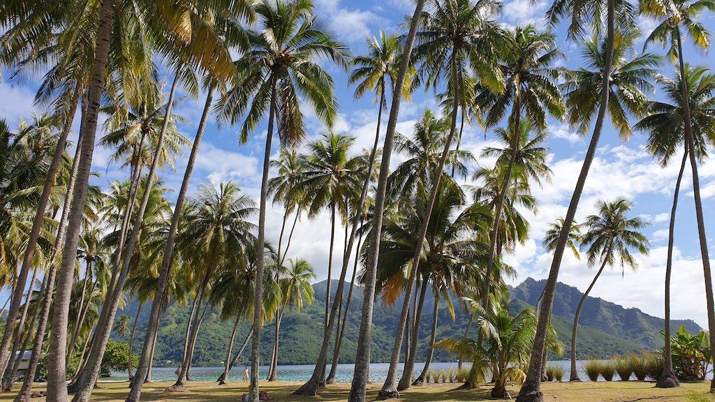 plage publique de Ta'ahiamanu Moorea