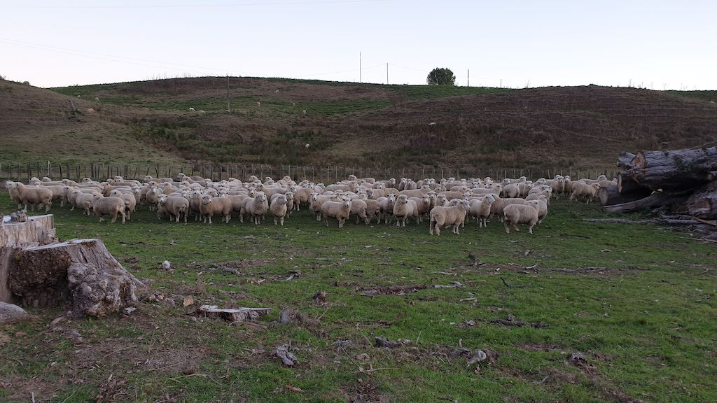 moutons forgotten highway