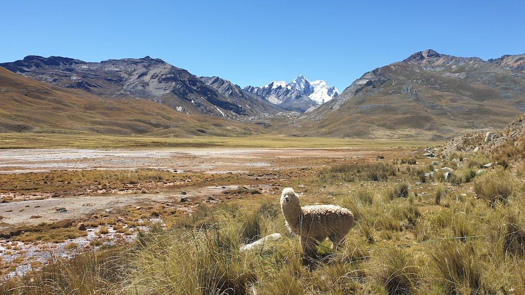 Alpaga sources d'eau gazeuse Pastoruri
