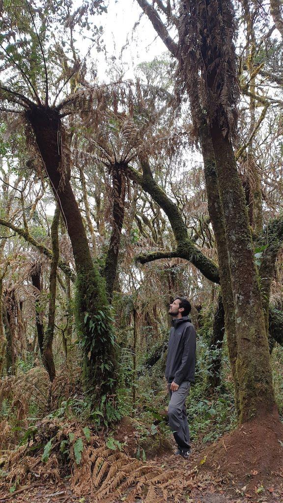Parc Amboro Samaipata fougère géante