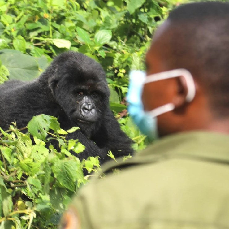 Africa Safari Post Covid-19