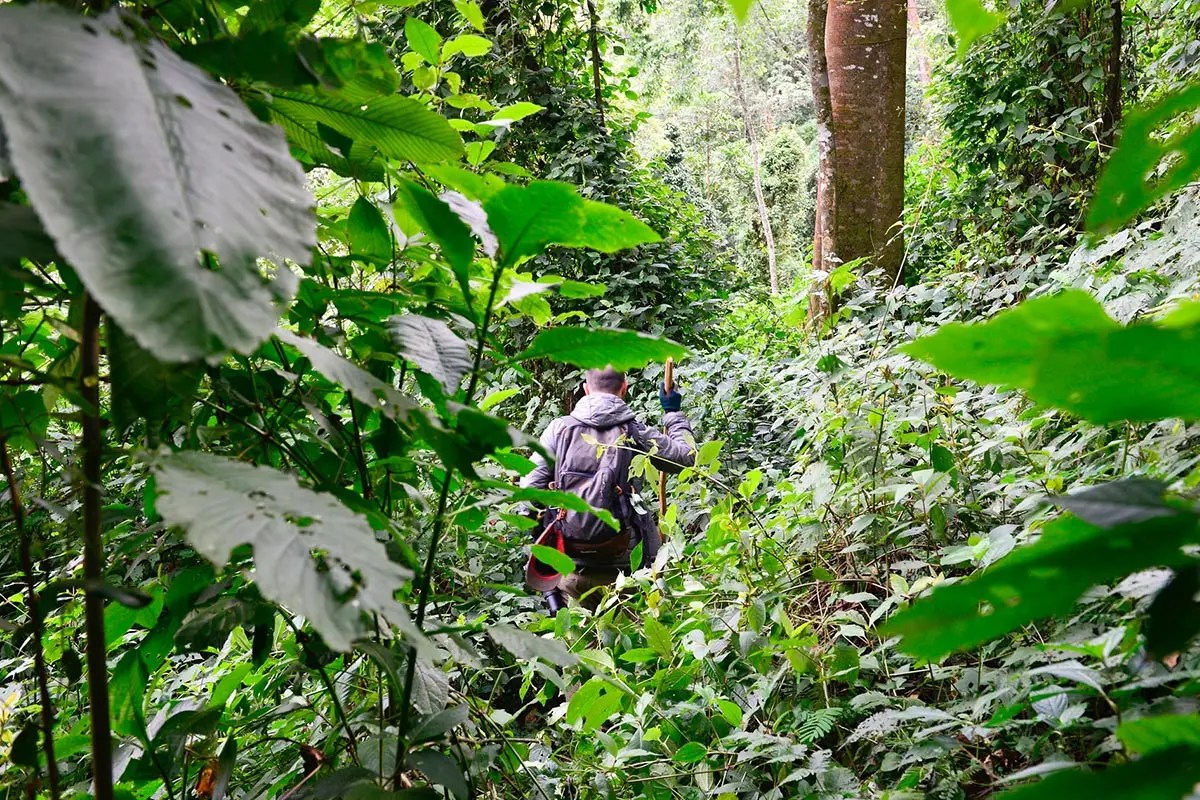 the gorilla trekking experience in uganda