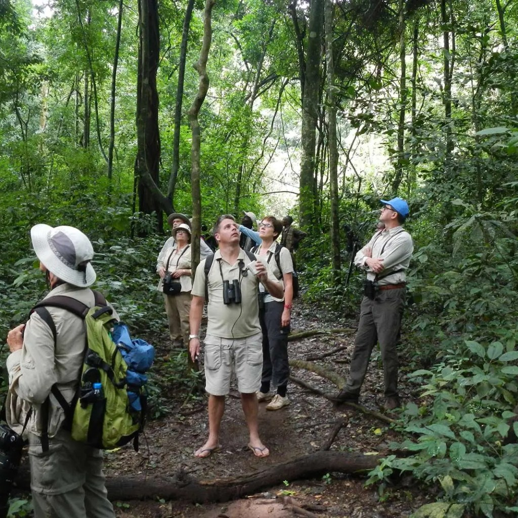 Birding in Uganda's Rainforests in Kibale forest
