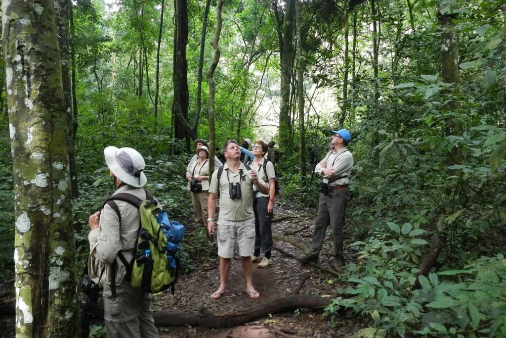 Birding in Uganda's Rainforests in Kibale forest