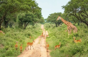 Uganda's Conservation Areas