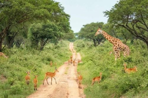 Uganda's Conservation Areas
