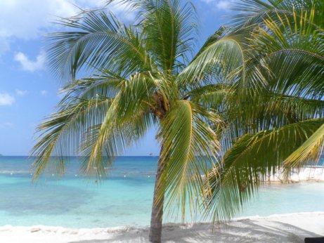 Destination Wedding Planning Jamaica