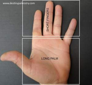 fire shaped hand, short fingers and long or large palm. career in palms