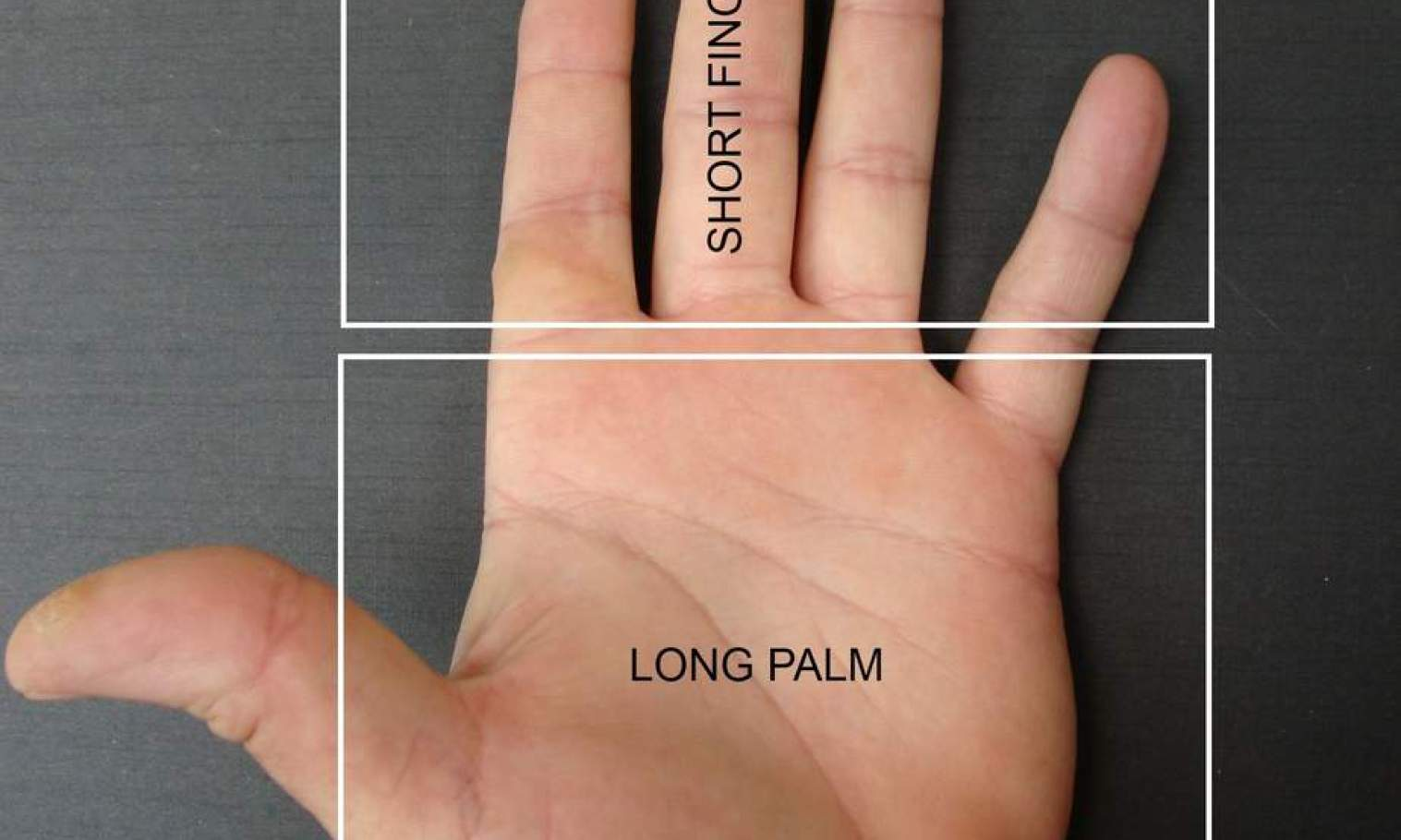 fire shaped hand, short fingers, large palm. career in palms, career choices, finger length