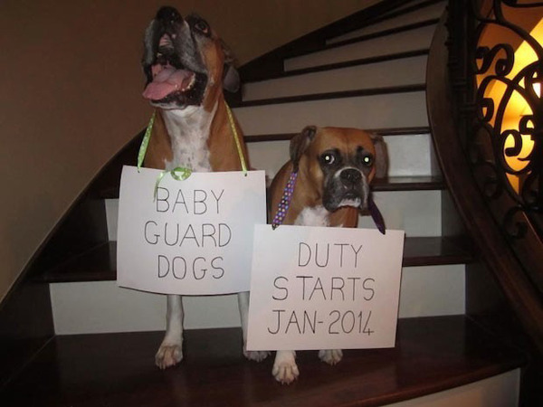 creative-pregnancy-announcements-5