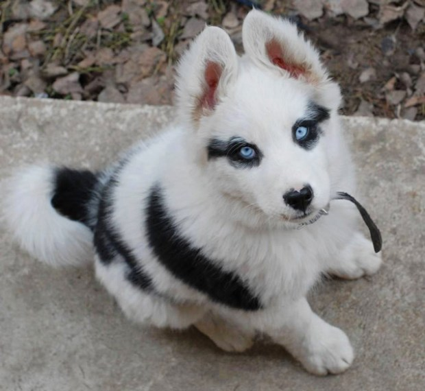 unusual-animal-markings-50