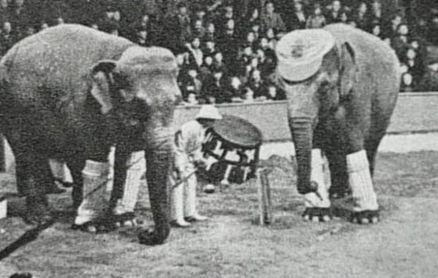 Murderous-Mary-the-elephant-4