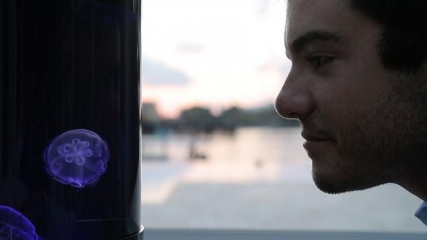 pet-jellyfish-art-led-aquarium-8