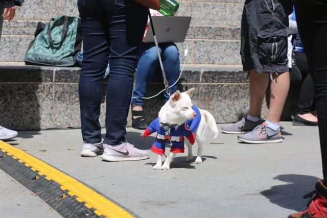 cosplay dog puppy animal cute captain america