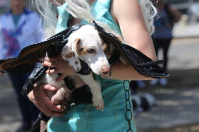 cosplay dog puppy animal cute dragon