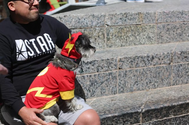 cosplay dog puppy animal cute Flash dc