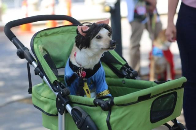 cosplay dog puppy animal cute star trek